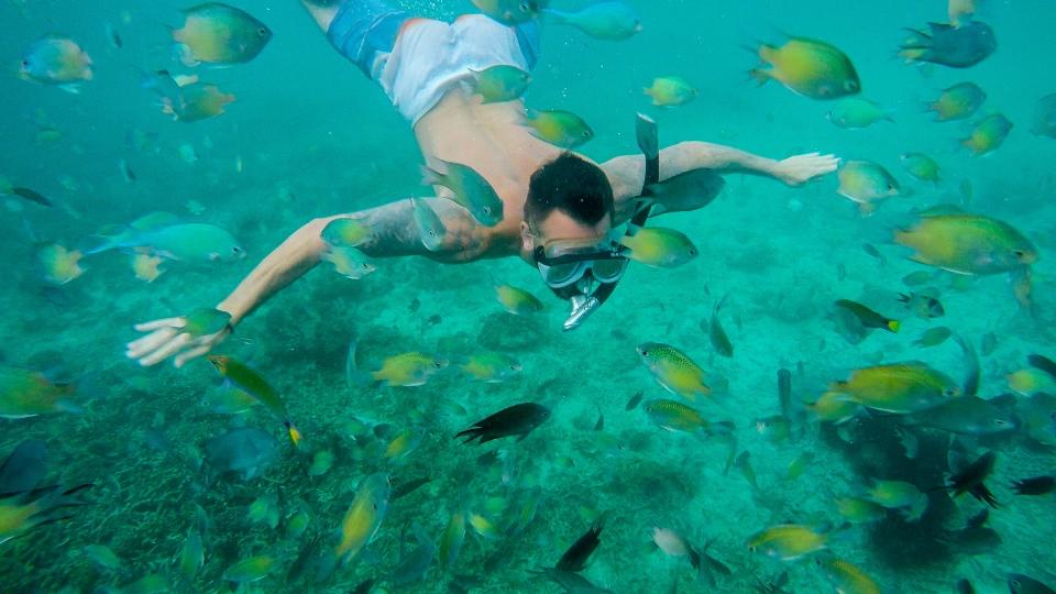 Fish-Budget Travel
